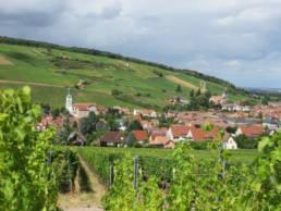 Vincent Stoeffler wijngaard